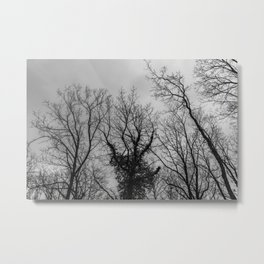 Haunting creepy naked trees in the woods, black and white Metal Print