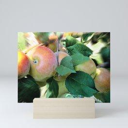 Apples. Mini Art Print