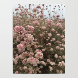 Pink and Cream Wildflowers Poster