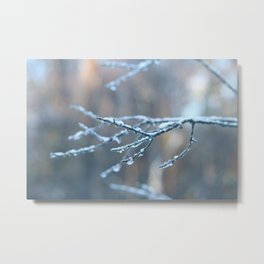 Frozen, snow covered branches Metal Print