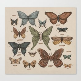 Butterflies and Moth Specimens Canvas Print