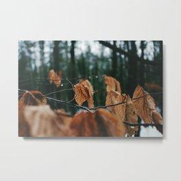 Change of Seasons Metal Print