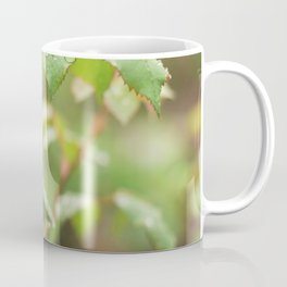 Leaves of roses with drops of water Coffee Mug