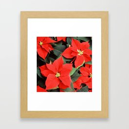 Beautiful Red Poinsettia Christmas Flowers Framed Art Print