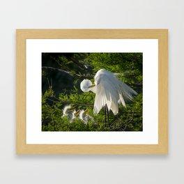 Great Egret Family Framed Art Print