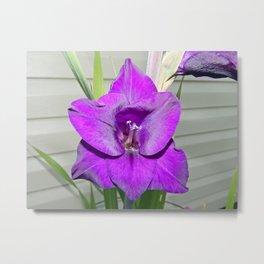 Purple Gladiola Metal Print