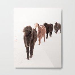 Icelandic Horses Walking Metal Print