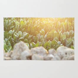 Sunset over a Mediterranean field and a dry stone wall Photo for Interior Design, south Italy, Rug