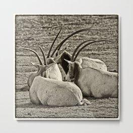 Oryx Metal Print
