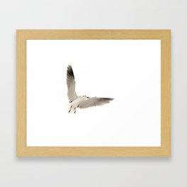 Seagull Orchestra I Framed Art Print