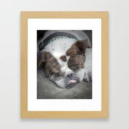 Bulldog (St. Patrick's Day), 2011.  New Orleans, LA. Framed Art Print