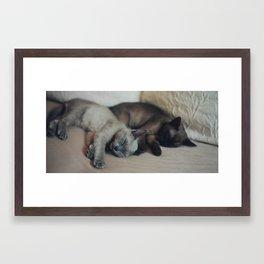 Sleeping Kittens Framed Art Print