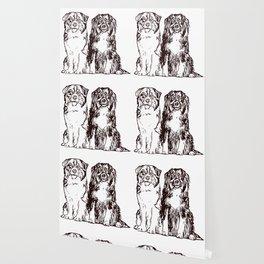 Australian Shepherd working dog for dog lovers Wallpaper