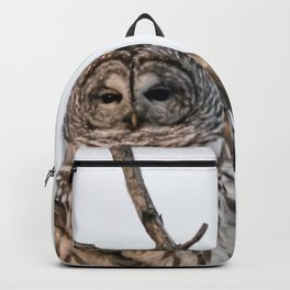 Barred Owl visitor on New Years Eve Backpack