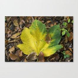 Maple Contrast Canvas Print