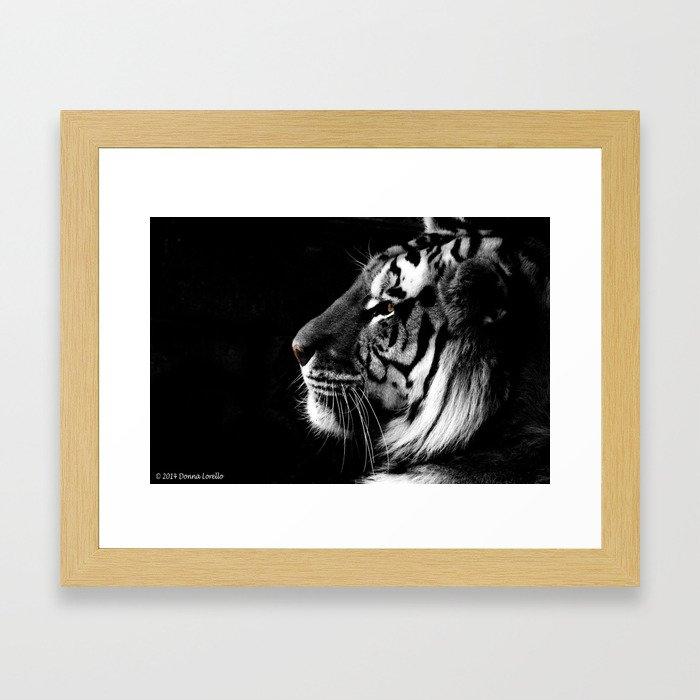 "Amur ""Siberian"" Tiger Framed Art Print"