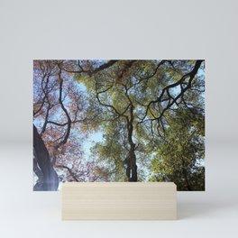 Dos Picos Ramona Oak Tree Mini Art Print