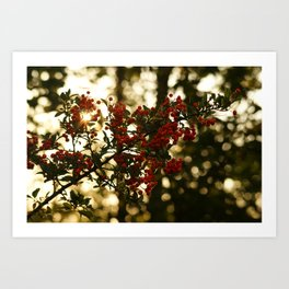 Rowanberry Art Print