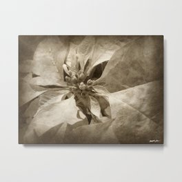 Pale Yellow Poinsettia 1 Antiqued Metal Print