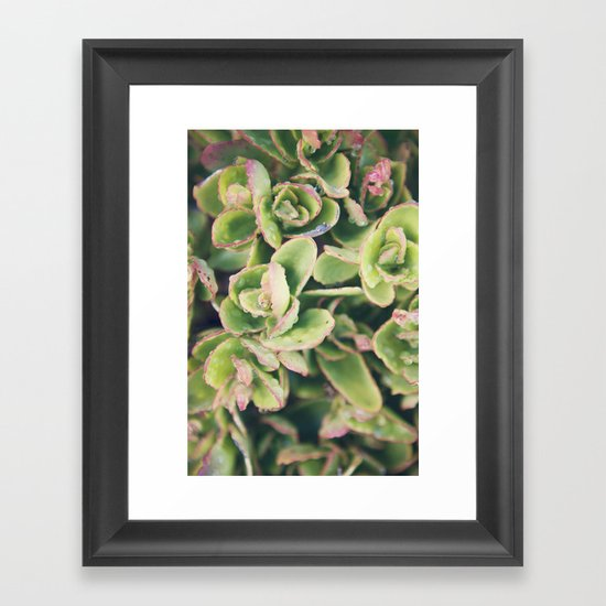 Succulent I Framed Art Print