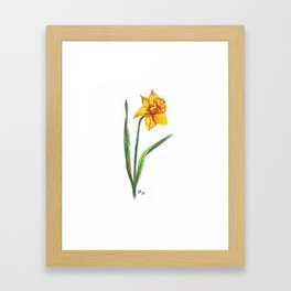 Narcissus flower Framed Art Print