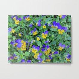 Flowers in Holland Metal Print
