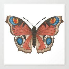 Peacock Butterfly Illustration Canvas Print