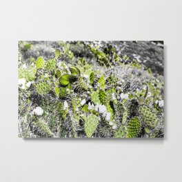 texture of the green cactus with white flower in the desert Metal Print