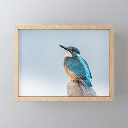 Common kingfisher (Alcedo atthis) Framed Mini Art Print
