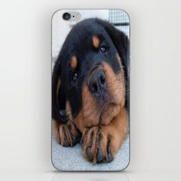 Riley  🐾  The Rottweiler Puppy  🐾 iPhone Skin