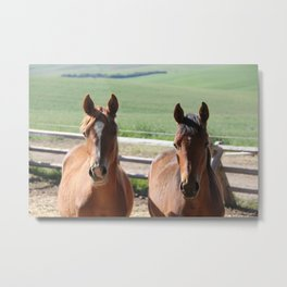 Horse Friends Photography Print Metal Print