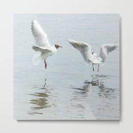 Dancing gulls Metal Print