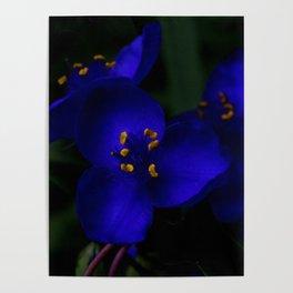 ultraviolet spider Poster