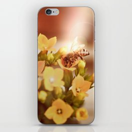 Honey herder 2 iPhone Skin