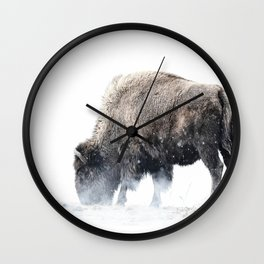 Bison grazing in a snowstorm Wall Clock