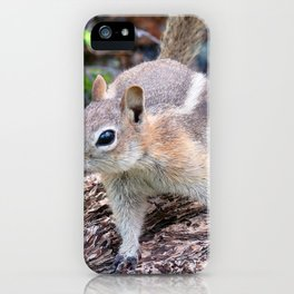 Watercolor Golden-Mantled Ground Squirrel 09, Dunraven Trail, Colorado, Too Close? iPhone Case