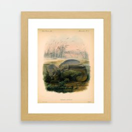 Vintage Scientific illustration, c. 1880 (Manatees) Framed Art Print