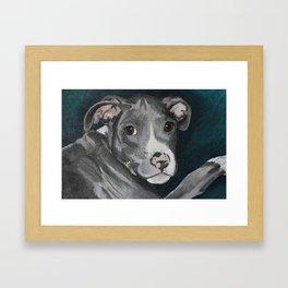 Pluto the Pitbull Framed Art Print