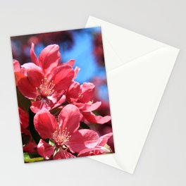Malus  Stationery Cards