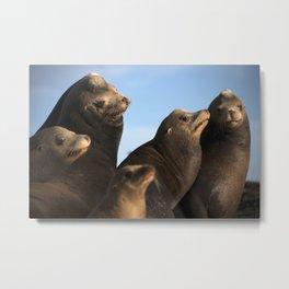 A family of Sea Lions sunbathing Metal Print