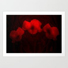 Poppies aglow Art Print