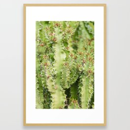 Euphorbia Lactea Cactus Framed Art Print