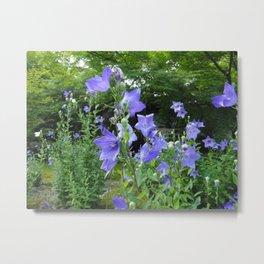 Blue bell flower /Japanese garden Metal Print