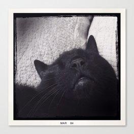 Mr. Cat Canvas Print