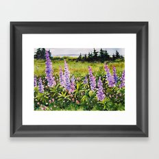 Lupines of Nova Scotia Framed Art Print