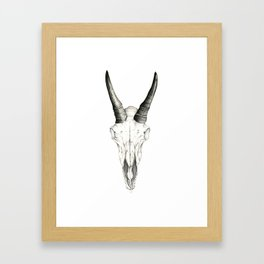 Mountain Goat Skull Framed Art Print