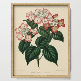 Vintage Botanical Print - 1868 - French hydrangea Serving Tray