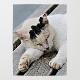 Cat Dreaming Poster