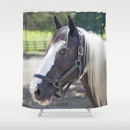 Gypsy Vanner Profile Shower Curtain