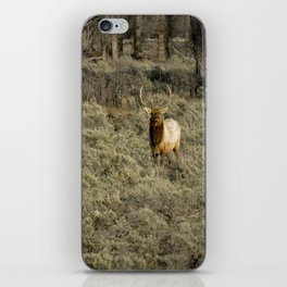 The Bull Elk iPhone Skin